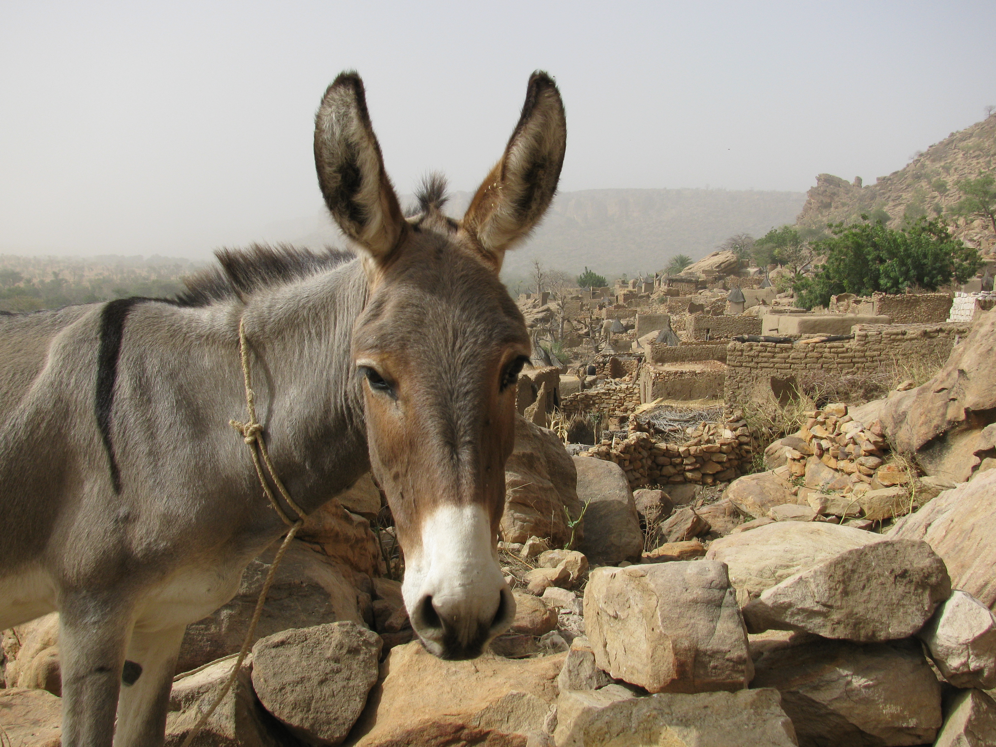 donkey One of the world's largest video sites, serving the best videos, funniest movies and clips.